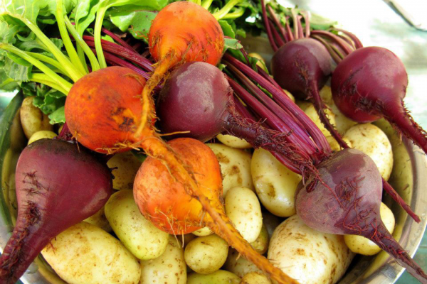 Freshly picked beets and potatoes from the organic garden at Estancia Ranquilco for farm-to-table food