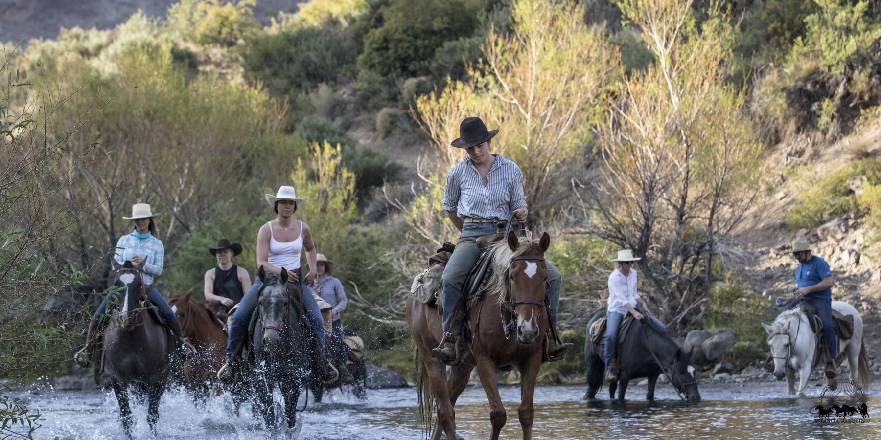 Criollo horses crossing the river