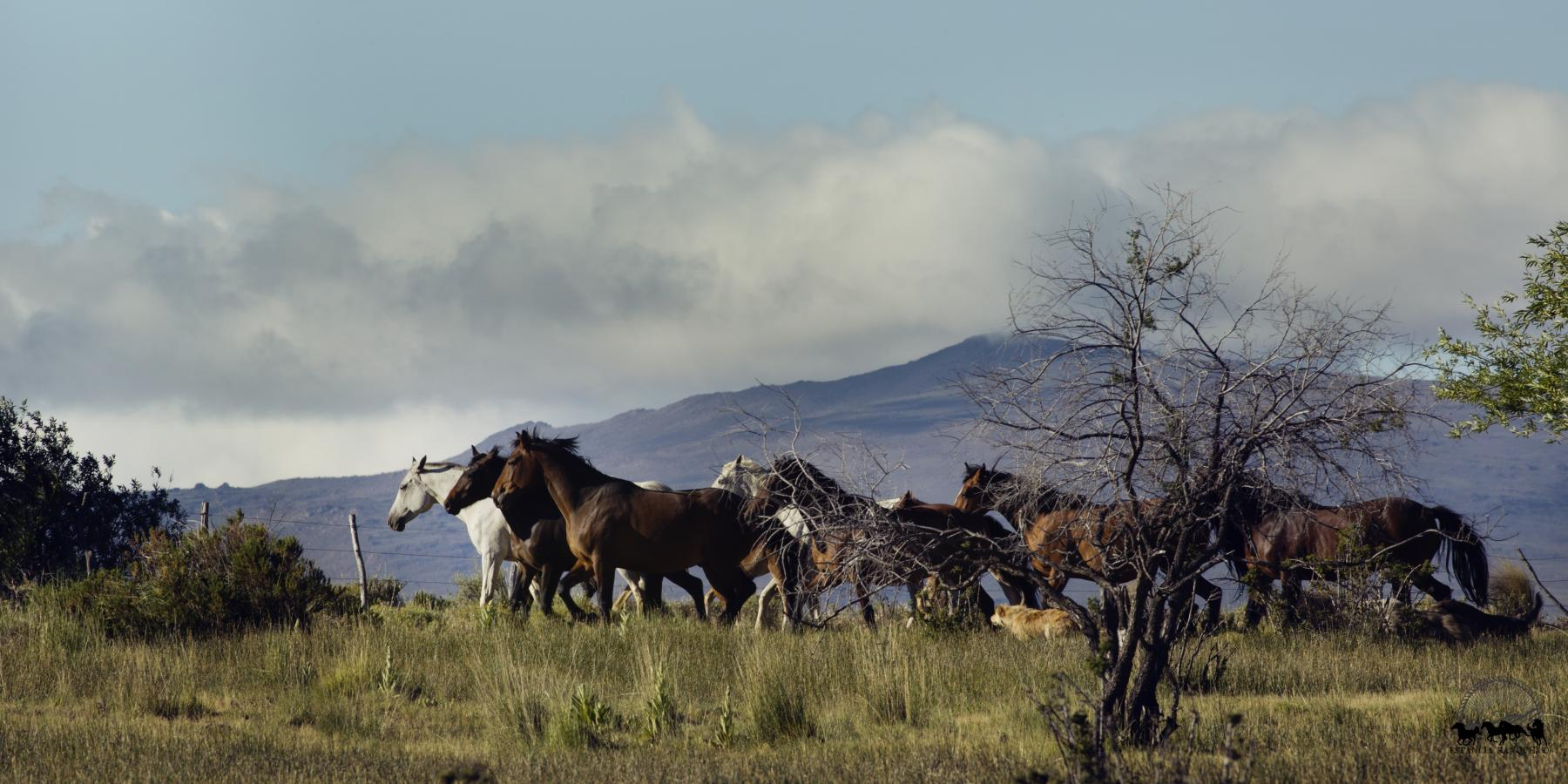 Horses running the Andes in Patagonia
