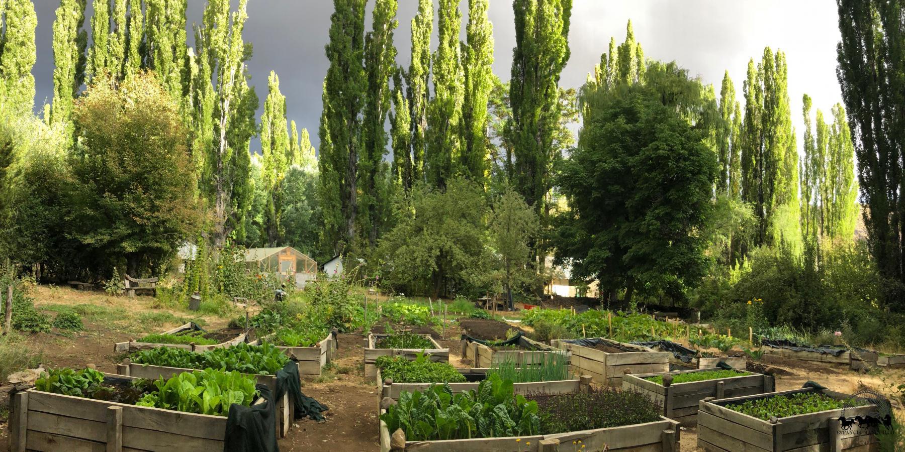 Estancia Ranquilco's organic garden supplies fresh produce to Ranquilco kitchens every day