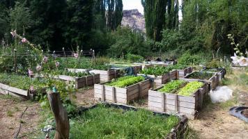 Organic garden supplies the ranch with fresh produce