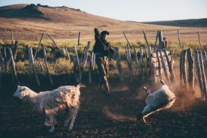a gaucho roping a goat for an asado at our lodge in Patagonia