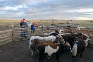 Mongolian herdsman and his two children observe their yaks in a corral in the Darkhad Valley during an Estancia Ranquilco horse pack trip in Northern Mongolia