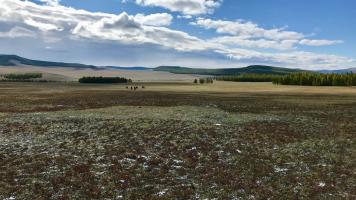 Approaching the taiga forest in Mongolia on an Estancia Ranquilco led horse pack trip