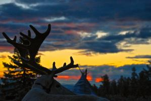 Reindeer striking a pose at sunrise with a teepee in the background in the taiga forest of Northern Mongolia.