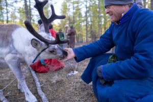 Man getting licked by a baby reindeer in the taiga forest of northern Mongolia