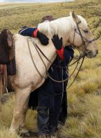 Woman hugging criollo horse at ranch Estancia Ranquilco in Argentina