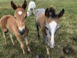 baby horses in the range at Ranquilco