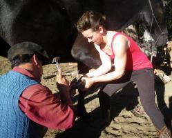 Heling gauchos shoe horses in Patagonia