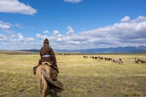 Horse and rider watching a large group of Mongolian horses run across the steppe
