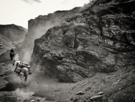 Argentine criollo horses riding into the mountains on an adventure horse pack trip in Patagonia Argentina