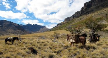 Siesta in the mountains of Patagonia on a horse trek