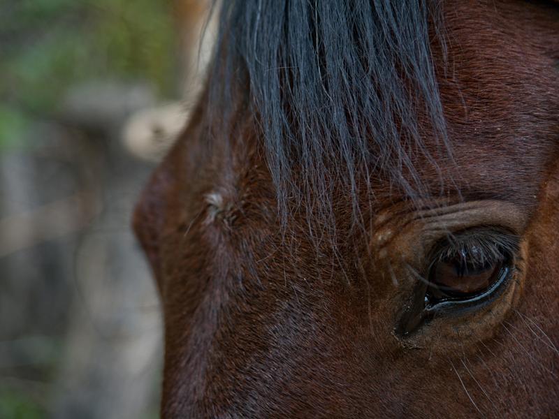 Natural Horsemanship Clinic in Patagonia Argentina